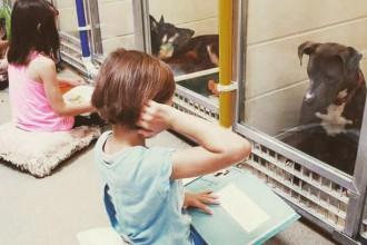 enfants-lisent-histoire-a-des-chiens-dans-un-refuge